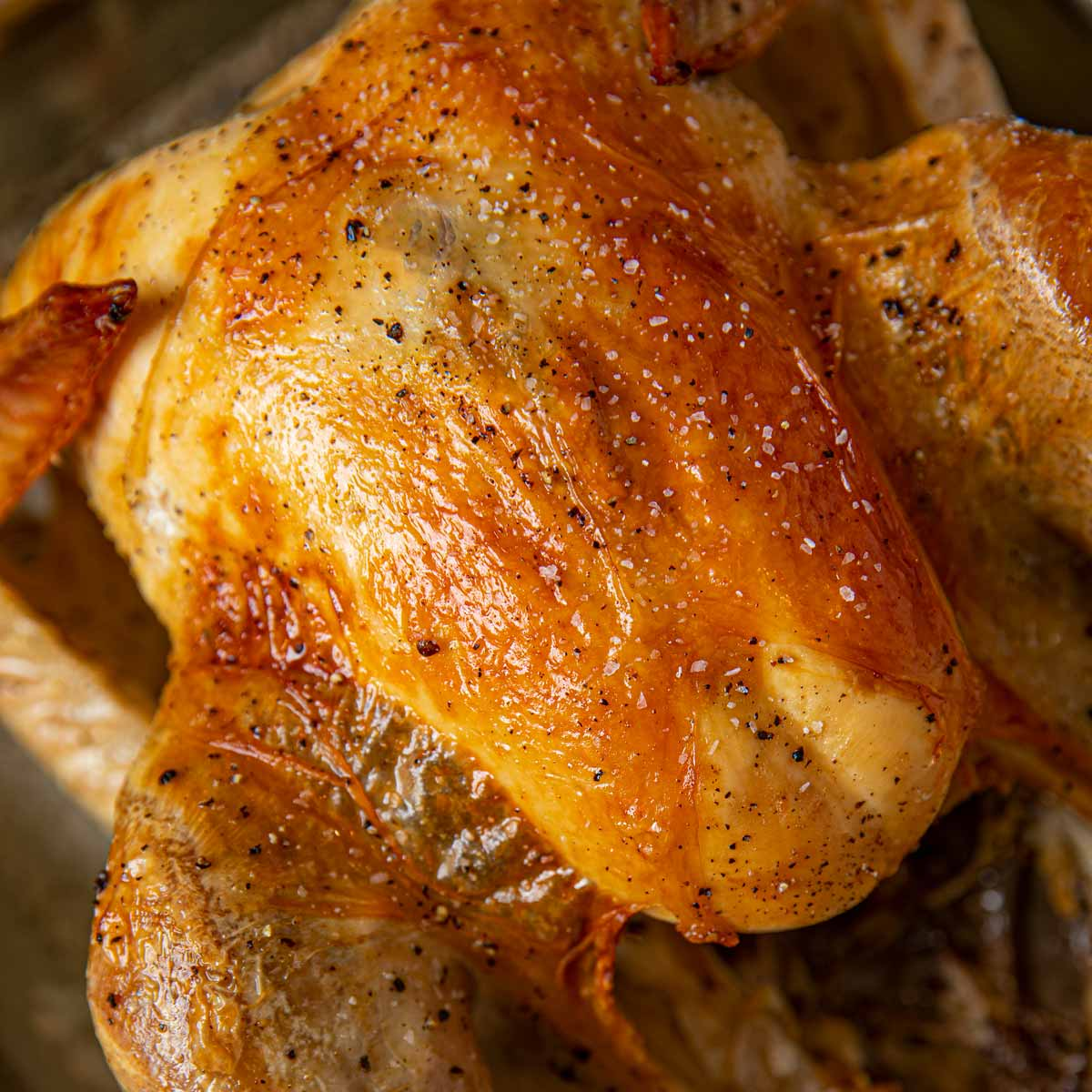 Roasted No Bake Turkey