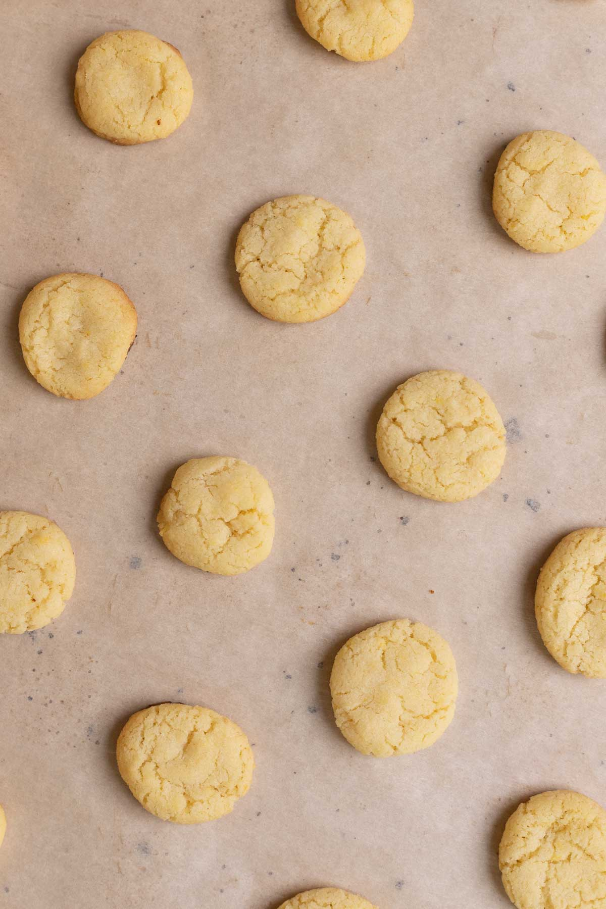 Nilla Wafer Cookies (Copycat) on parchment and baking sheet after baking